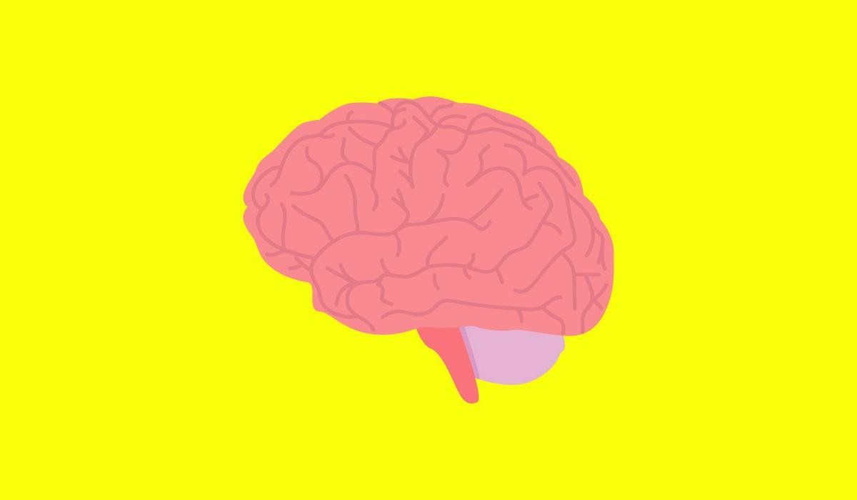 neurodidattica