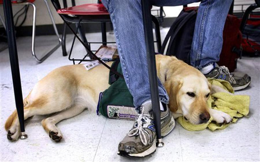 scuola con il cane