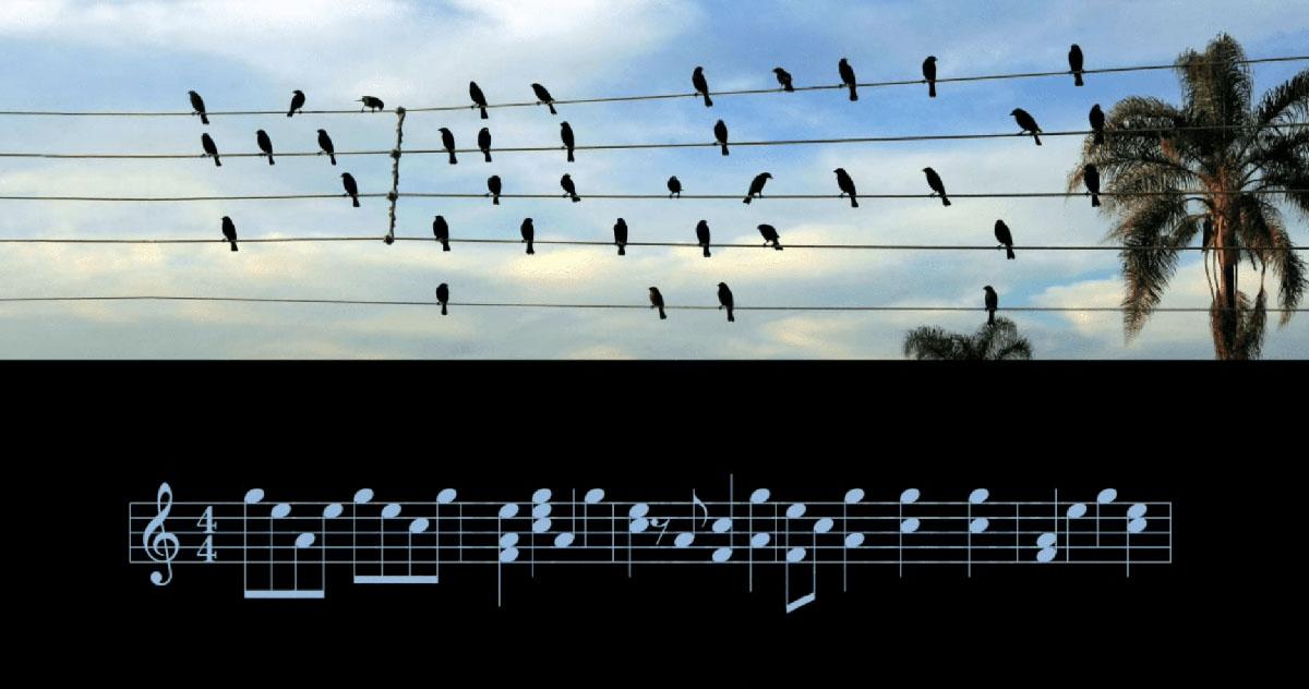 uccellini appoggiati