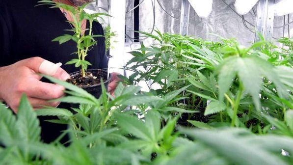 Chiusura Negozi Cannabis