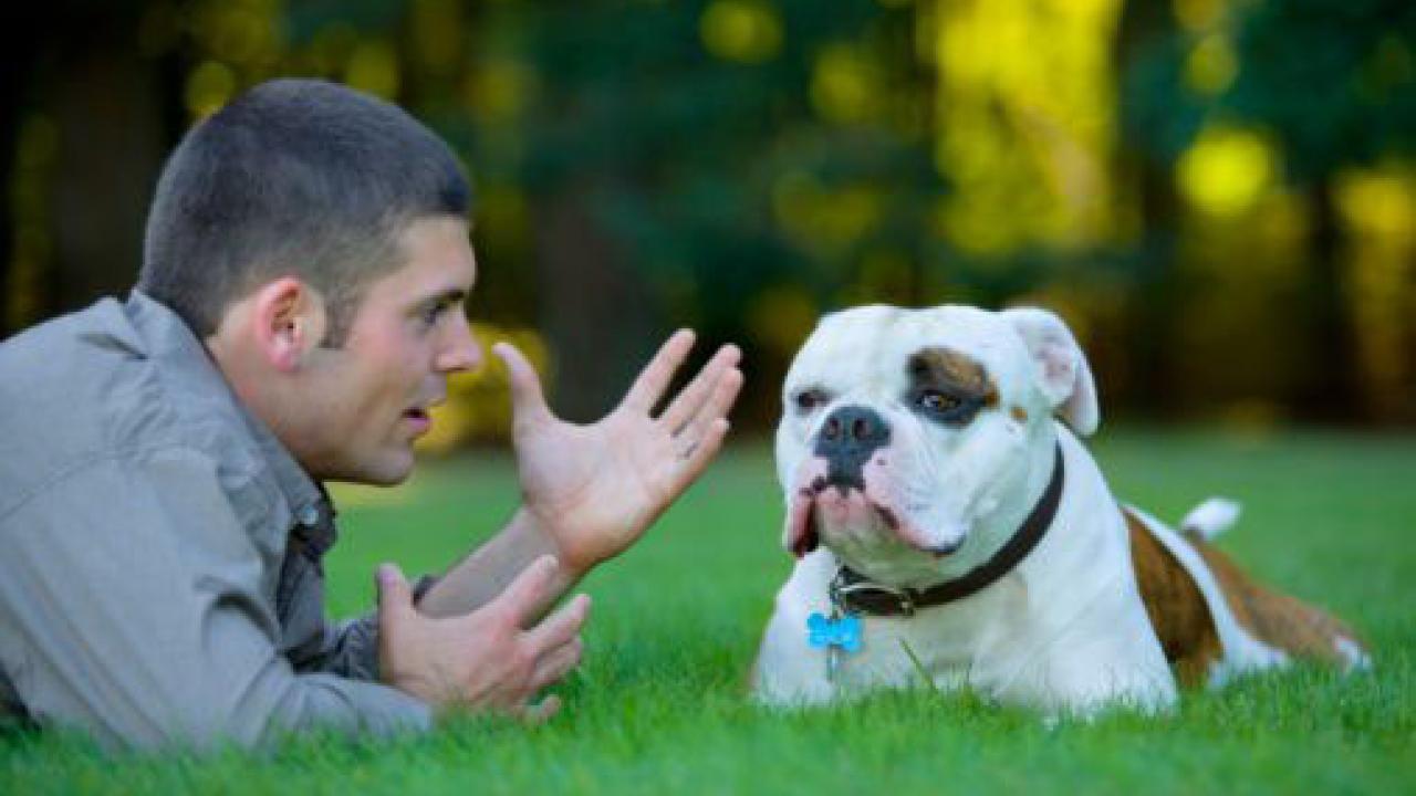 Parliamo con Animali