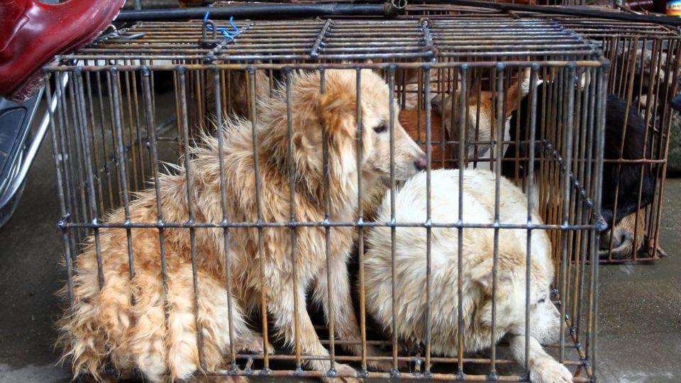 carne di cani e gatti