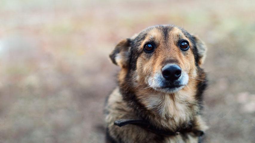 abbandoni cani coronavirus