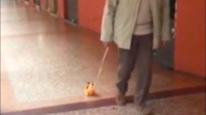 nonno cane giocattolo