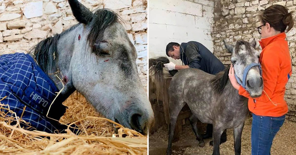 Adolescenti Picchiano a Morte un Pony per Gioco, Ora è Cacci