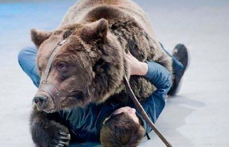 Domatore Sbranato da un Orso