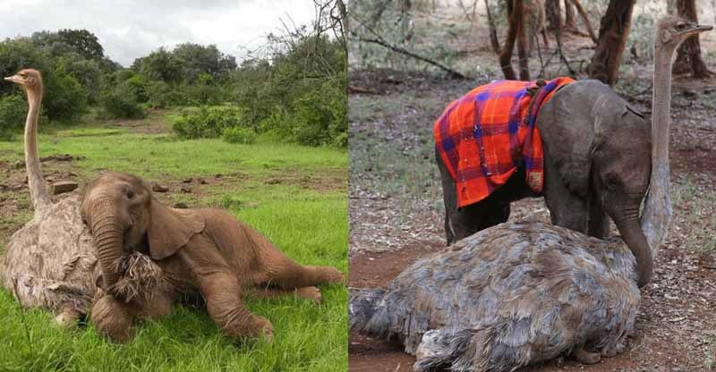 elefantino resta orfano
